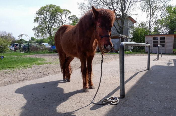 Entspanntes Pferd am Putzplatz