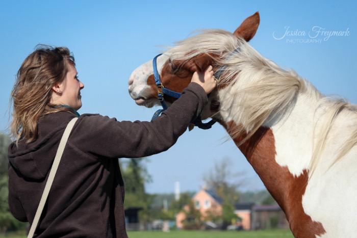 Pferd genießt Kraulen