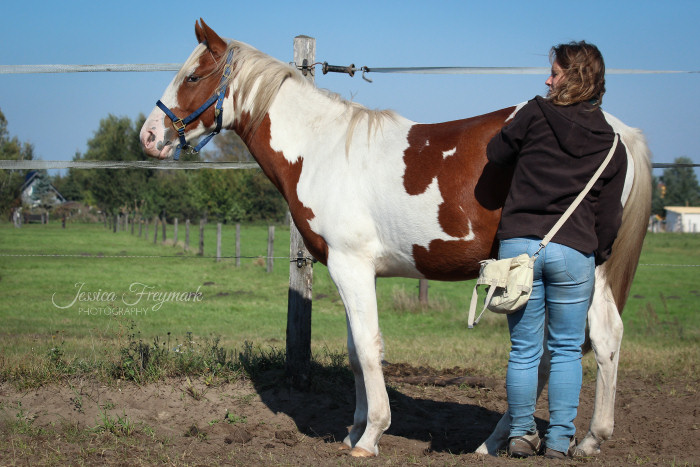 Schau dein Pferd an beim Putzen
