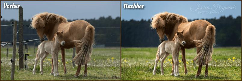 Bildbearbeitung bringt das beste eines Bildes zum Vorschein