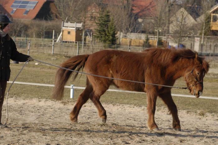 Deutliches Nein meines Pferdes