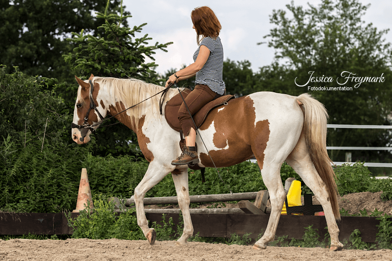 Fotodokumentation-Pferd-Reiter