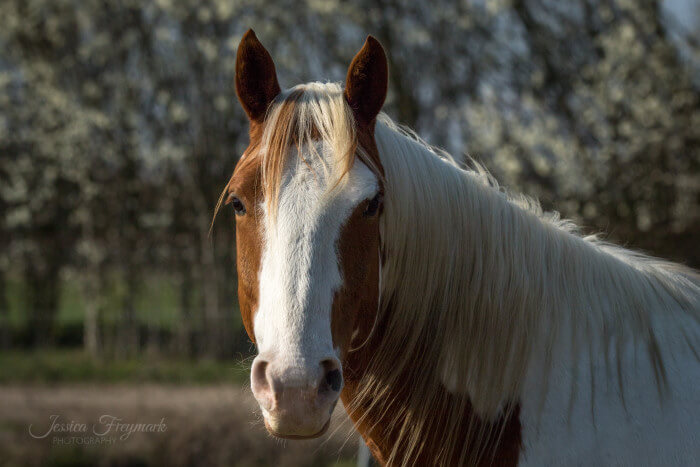Pferd schaut zum Menschen