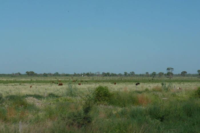 Die argentinische Pampa
