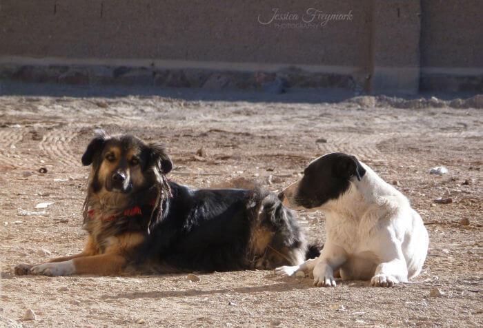 2 Hunde in Pocitos