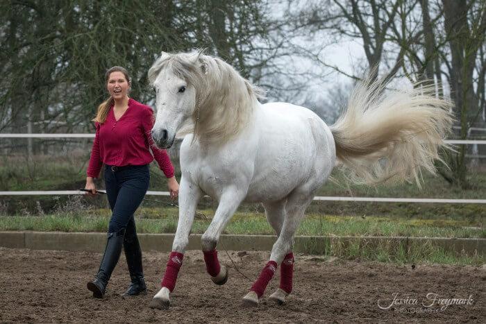 Pferde galoppiert vom Mensch weg