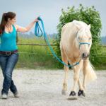 Pferd und Mensch bei der Bodenarbeit