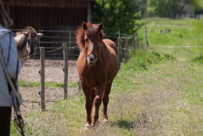 Pferd kommt auf der Weide zu mir