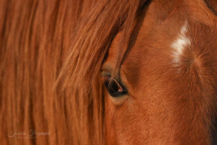 Gedankenübertragung zwischen Pferd und Mensch - Humbug oder Realität?