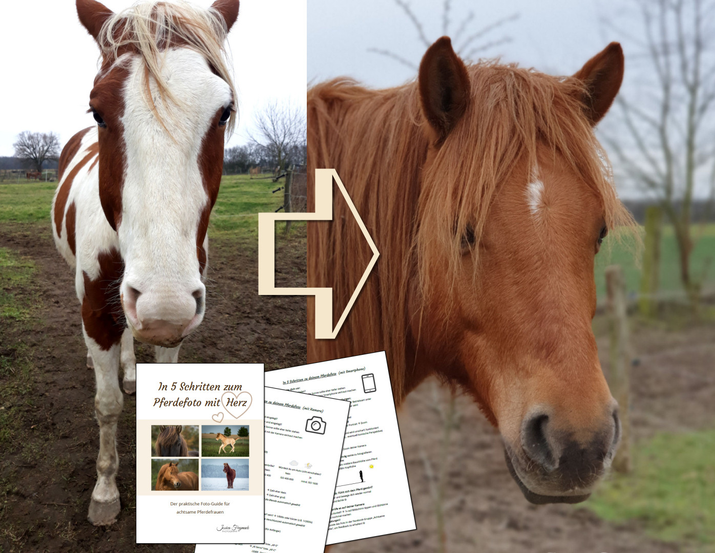Mit dem Foto-Guide zu wunderschönen Pferdefotos!