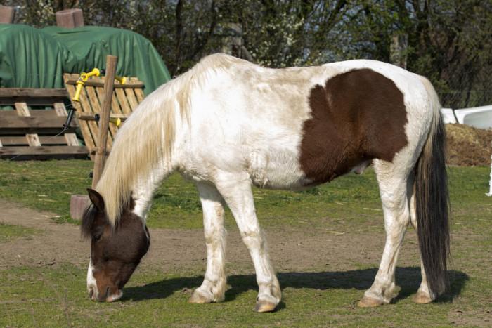 Viele störende Objekte im Hintergrund des Pferdes…