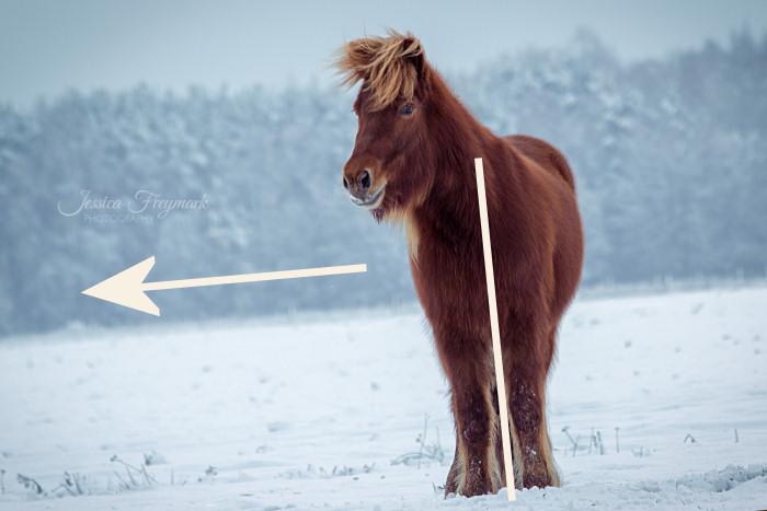 Bei einem so schiefen Horizont wirkt es als würde das Pferd gleich nach links umfallen.