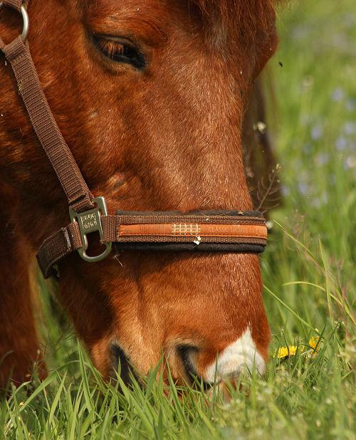 Pferd mit unschöner Mimik