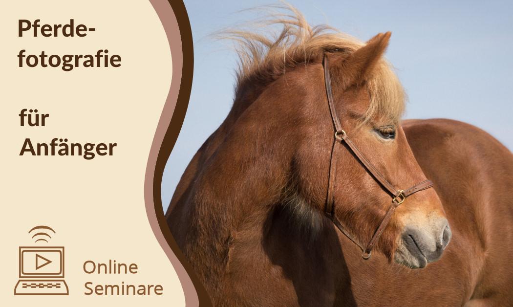 Pferdefotografie für Anfänger - Onlineseminare
