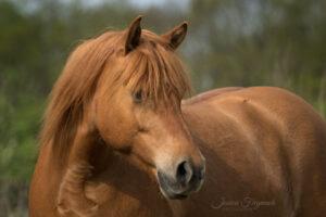 Schönes Pferdefoto