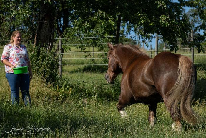 Pferd trabt auf Frau mit Futterschüssel zu