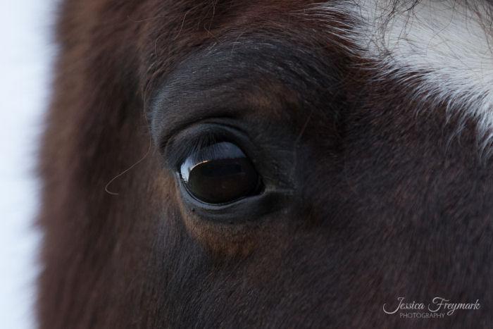 Entspanntes Pferdeauge