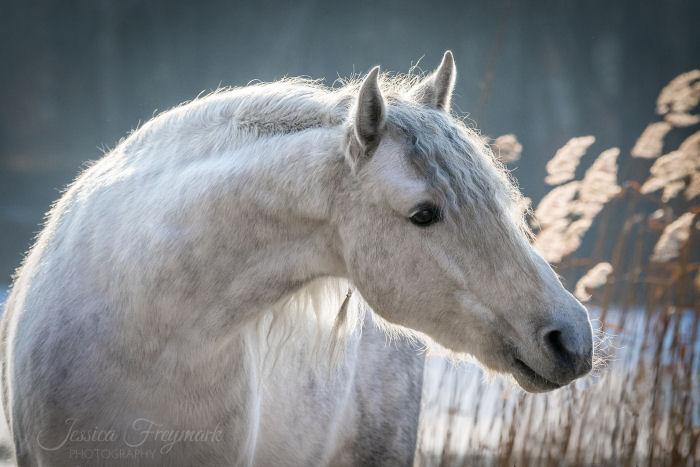 Fertiges schönes Pferdebild