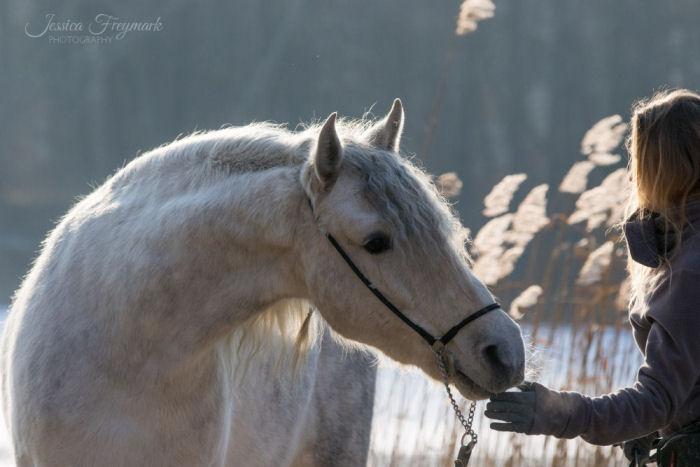 Pferd streckt sich Menschenhand entgegen