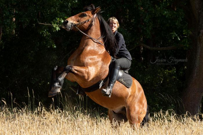 Schwarz auf Braunem Pferd