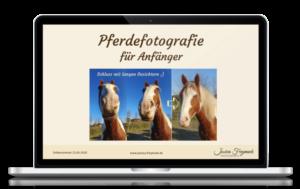 Pferdefotografie für Anfänger
