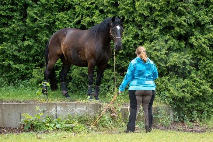 Kommunikation zwischen Pferd und Mensch