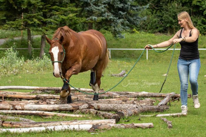 Pferd geht über die Äste