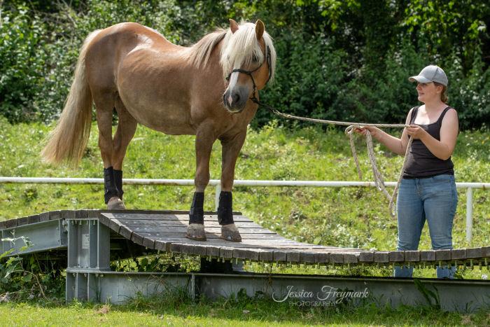 Altes Pferd auf der Hängebrücke
