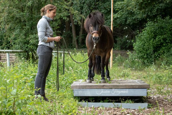Pony auf dem Balance Board