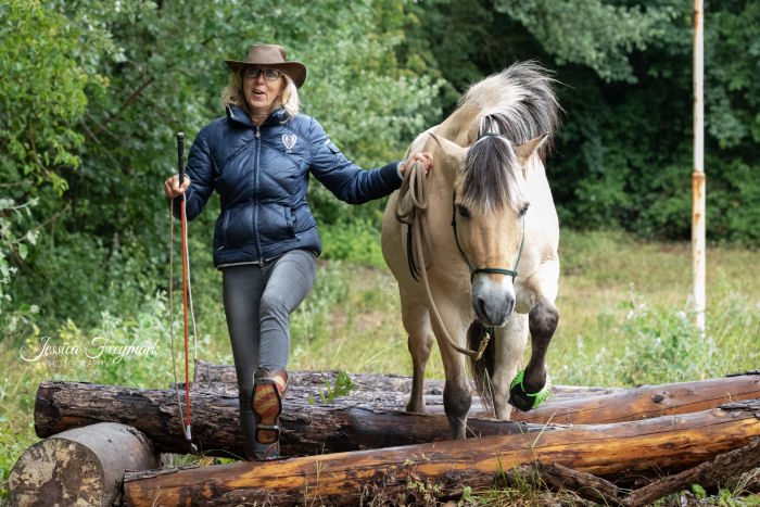 Pony und Menschen gehen über die Baumstämme