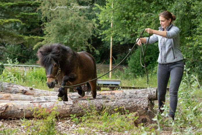 Pony geht über die Baumstämme