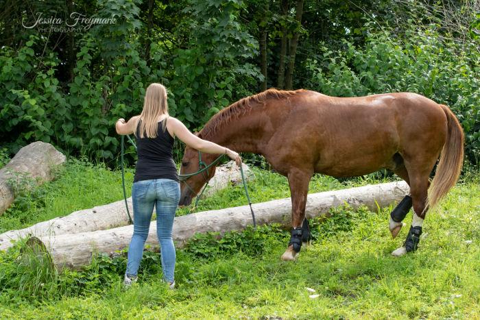 Pferd an dem Baumstamm Fächer