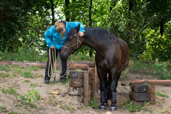 Pferd im Graben