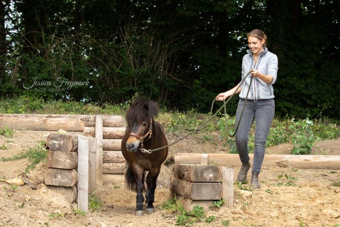 Pony im Graben