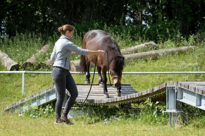 Pony wagt sich auf die Hängebrücke