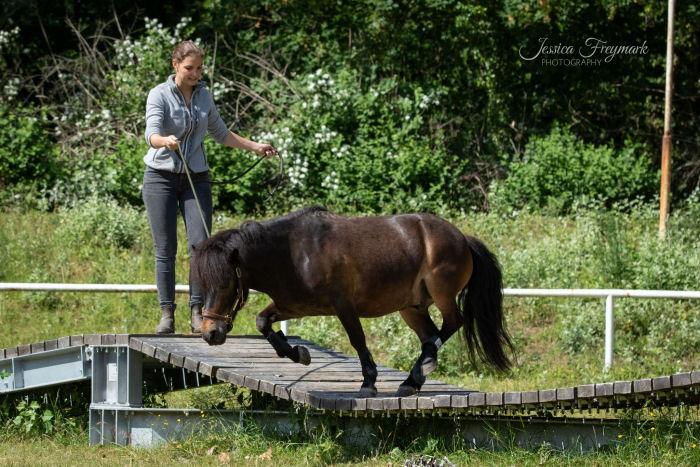 Pony springt quer über die Hängebrücke