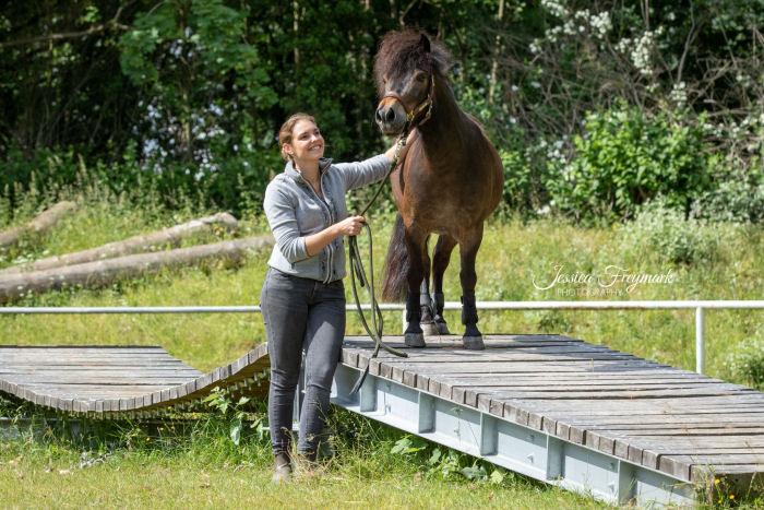 Pony stolz auf der Hängebrücke