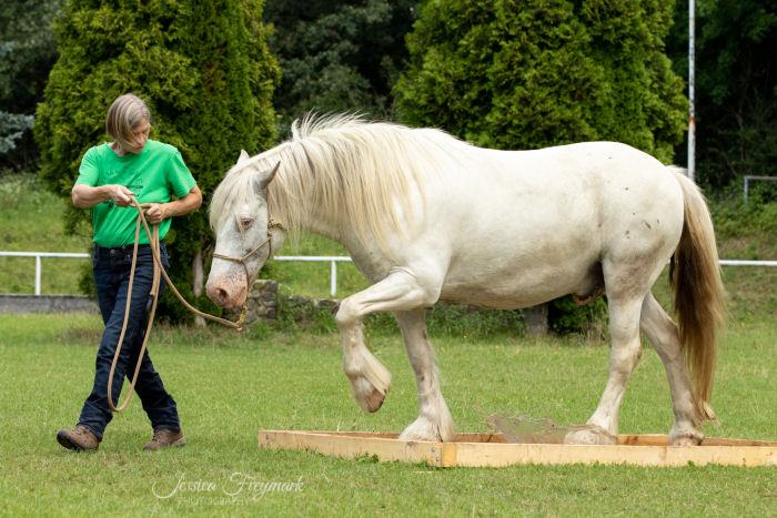 Pferd geht über das Lochbrett