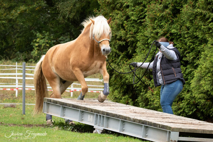Pferd springt auf die Wippe