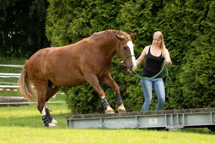Pferd unsicher auf der Wippe