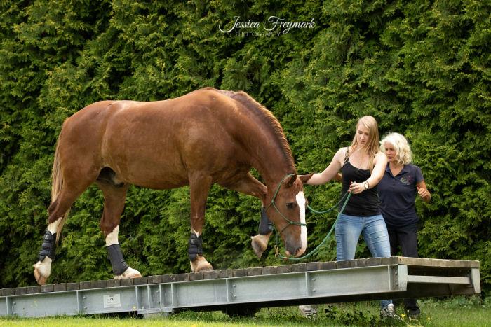 Pferd auf der Wippe