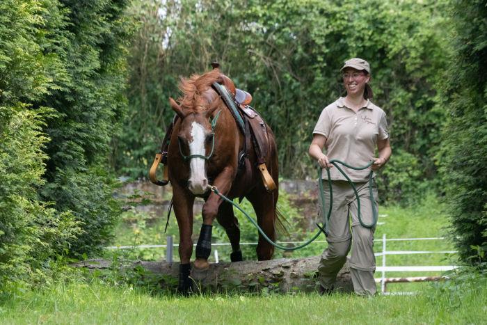 Jessica Freymark mit Leihpferd am Sprung