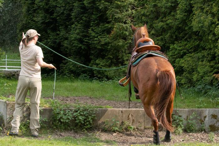 Jessica Freymark mit Leihpferd am Aufsprung