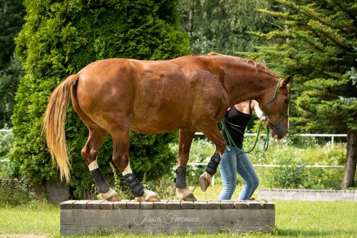 Pferd auf dem Podest