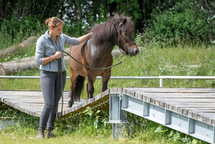 Pony auf Hängebrücke
