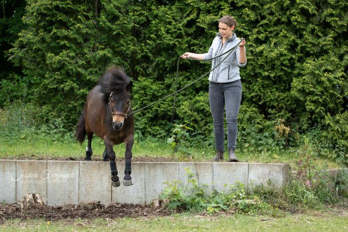 Pony beim Absprung