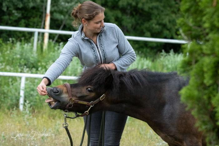 Pony schnappt nach Leckerli