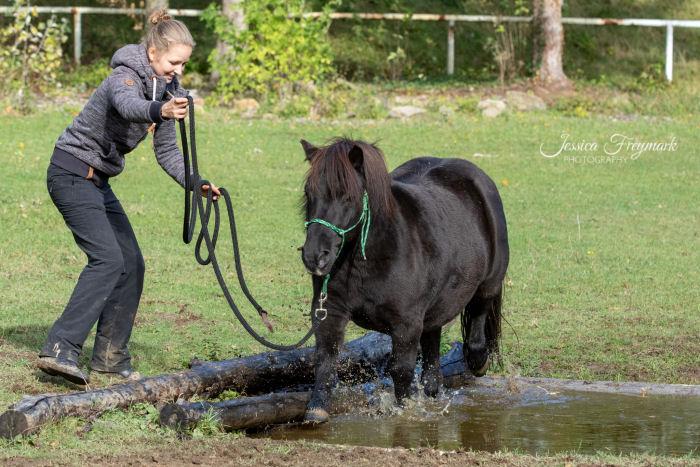 Pony geht durchs Wasser