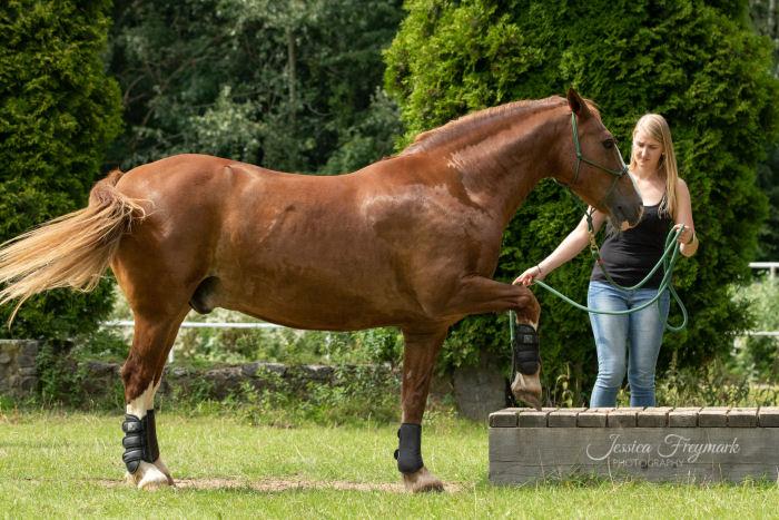 Pferd ist unsicher am Hindernis