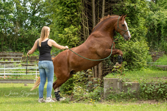 Pferd beim Aufsprung